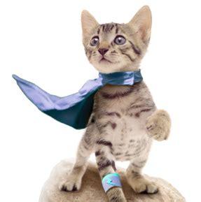 cat insurance   nationwide cat and kitten insurance plans