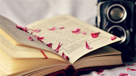 book walpaper book lover wallpaper wallpapersafari