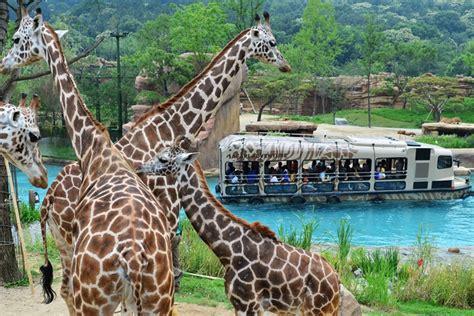 theme park zoo zoo korea everland 에버랜드 official korea tourism organization