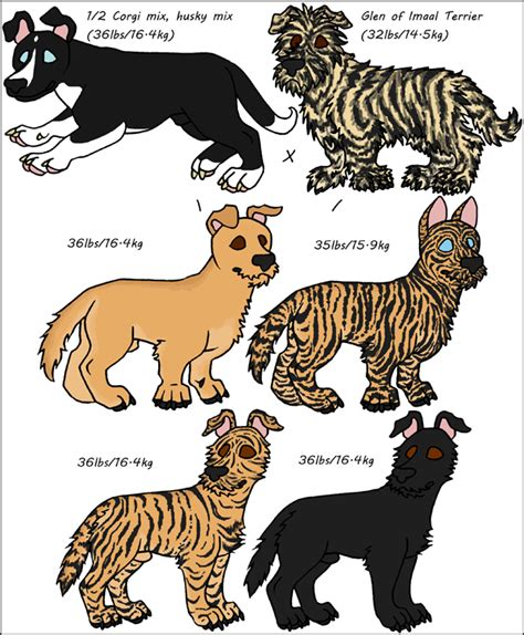 scruffy breeds scruffy mixed breeds by leonca on deviantart
