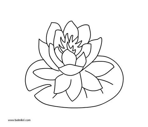 coloring page water lily free water lily flower coloring pages