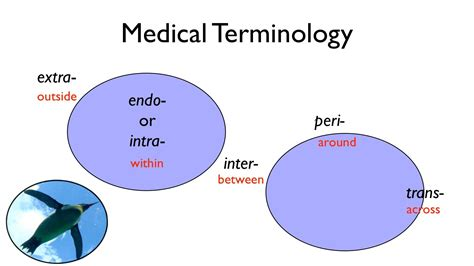 medical terms medical terminology youtube