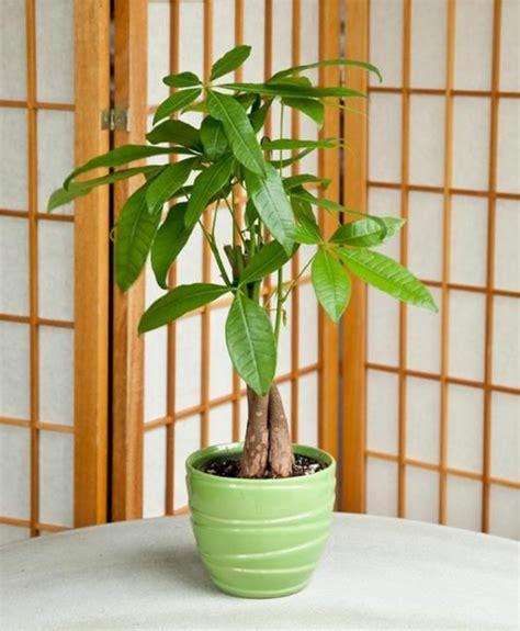 Wohnzimmer Nach Feng Shui 3914 by Feng Shui Pflanzen F 252 R Harmonie Und Positive Energie Im
