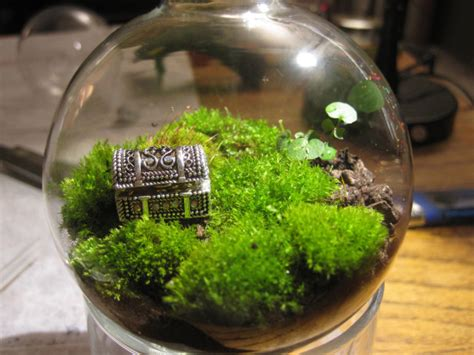 best plants for closed terrariums diy your own world a terrarium