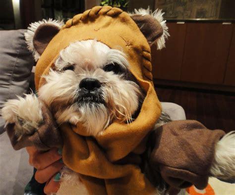 wars puppy ewok costume