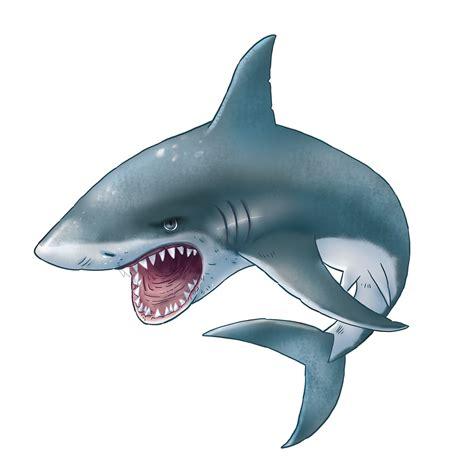 images of sharks sharks png images free shark png