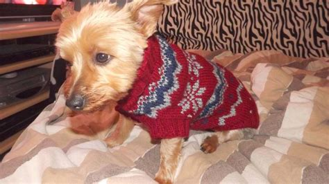 Strickanleitung Hundepullover Chihuahua by Strickanleitung F 252 R Einen Hundepulli Im Norwegermuster