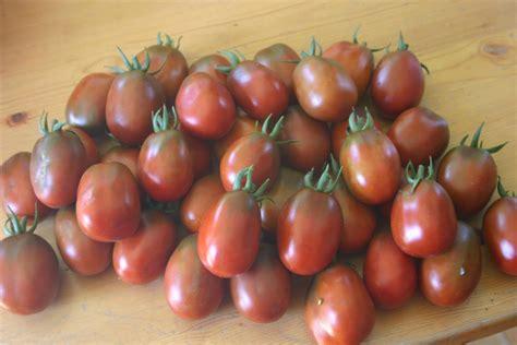 Tomot Black Plum black plum tomato