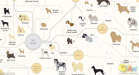 standard pug family trees of dogs shows how every breed is related amazing cari