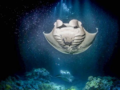 big island catamaran snorkel hula kai manta ray night swim snorkeling catamaran