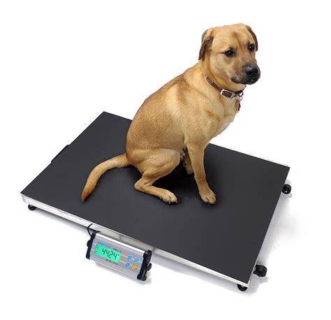 bench and floor scales products ae south africa veterinary scales products ae south africa