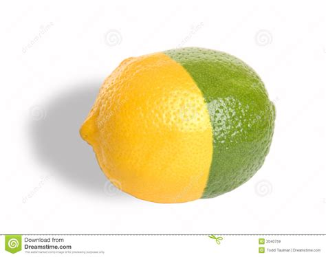 which is better lemon or lime lemon lime royalty free stock images image 2040759