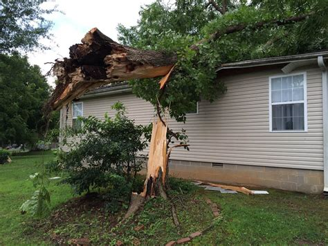 tree fell on house home strong winds blamed for towering tree falling on house wbbj tv