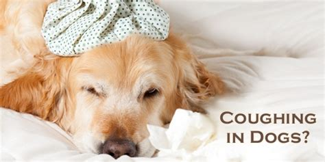 coughing in dogs coughing in dogs a harmless symptom or a up call for a deadly disease