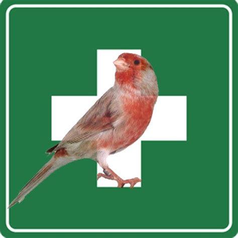 Obat Cacing Burung Kenari mengatasi suara kenari serak kenari pemula