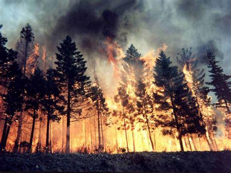 la repubblica l amaca l italia in fiamme da l amaca di michele serra la