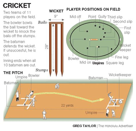 diagram of cricket field cricket pitch layout