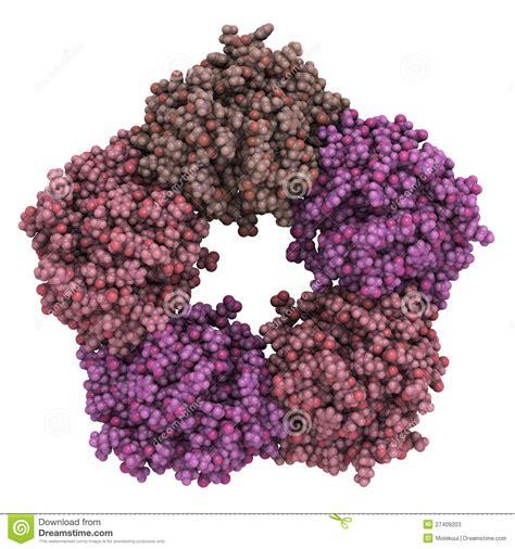 s proteina c reattiva prote 237 na c reactiva humana crp fotos de archivo imagen