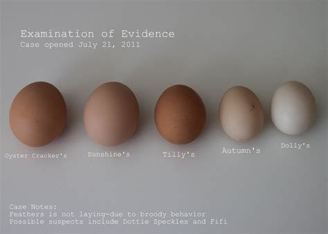 what color eggs do chickens lay someone laid an egg tilly s nest