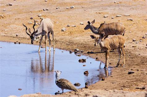 imagenes animales que viven en el desierto kostenloses foto namibia reise afrika tiere