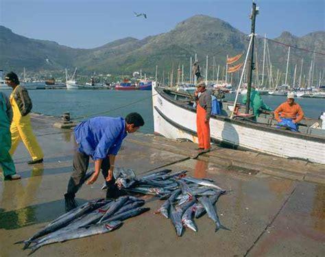 fishing boat jobs in cape town snoek fishermen hout bay western cape province south