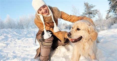 symptoms of antifreeze poisoning in dogs antifreeze poisoning in dogs