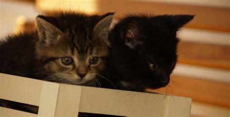 wann baby erstausstattung kaufen katzenbabys informationen und bilder rund um die katze