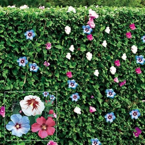 Flower Gardening 101 30 Best Images About Of In Garden On Garden Plants Plants And Trees