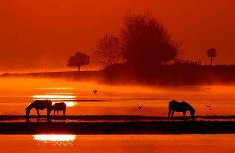 animals illuminated  sunset photo gallery karma jello
