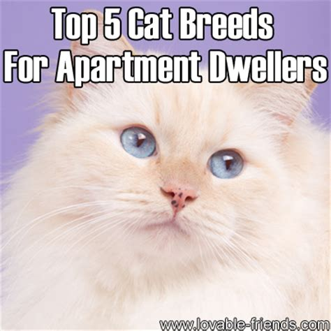 breeds for apartments top 5 cat breeds for apartment dwellers lovable friends