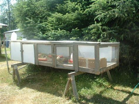 quail backyard triyae com backyard quail production various design
