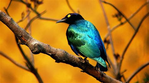 Bird Wallpapers blue bird wallpapers hd wallpapers