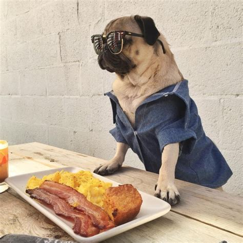 i m going to eat you pug 25 times doug the pug accurately described your relationship with food
