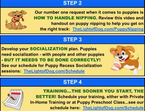 what to do with a new puppy stop your from rocks socks and other non food items