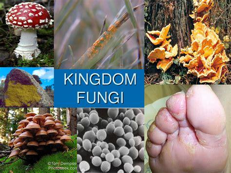 exle of fungi fungi lovecraftian science