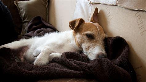 how often should puppies sleep dogs sleep often flickr photo