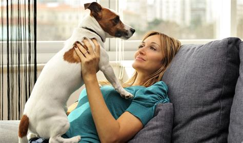 best small dogs for apartments 25 best breeds for small apartments top tips
