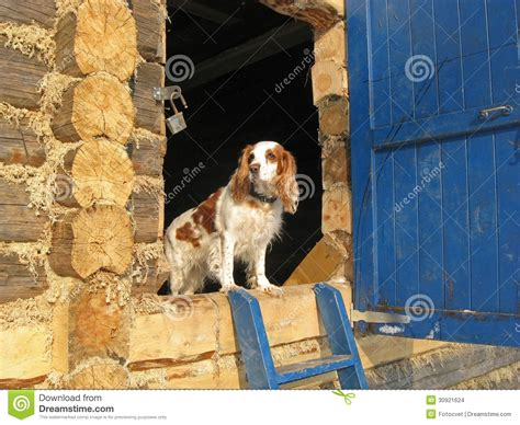 dog for house guard dog guards the house stock images image 30921624