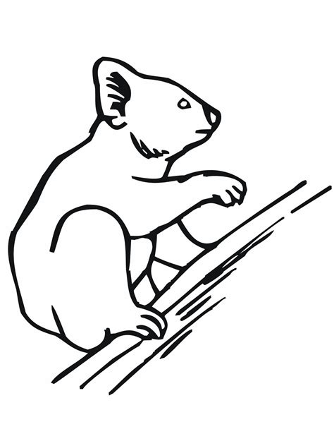 coloring pages of koala free printable koala coloring pages for kids