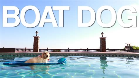 how to make a boat r for dogs boat dog youtube