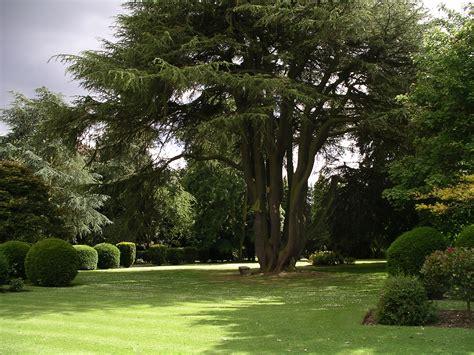 summer gardening tips portland rock  landscape supply