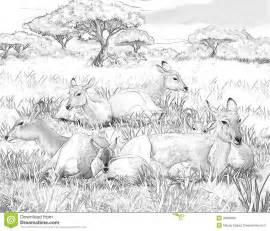 safari koba lychee coloring page illustration for