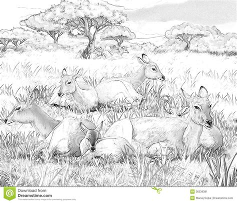 secret garden coloring book national bookstore price safari koba lychee coloring page illustration for