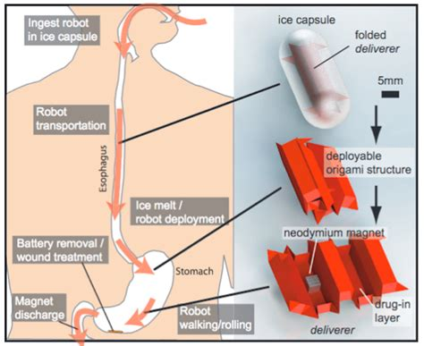 How To Make A Origami Robot - tiny ingestible robot can deliver medicine patch wounds