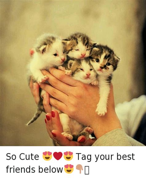 Cute Best Friend Memes - cute best friend memes 28 images funny cartoons funny