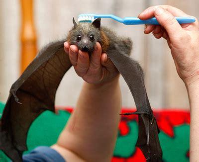 bat | cute n tiny