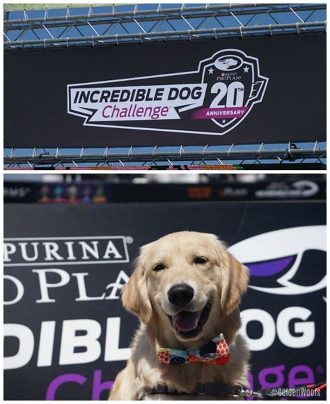 purina pro plan puppy golden retriever 20 years of the challenge call for
