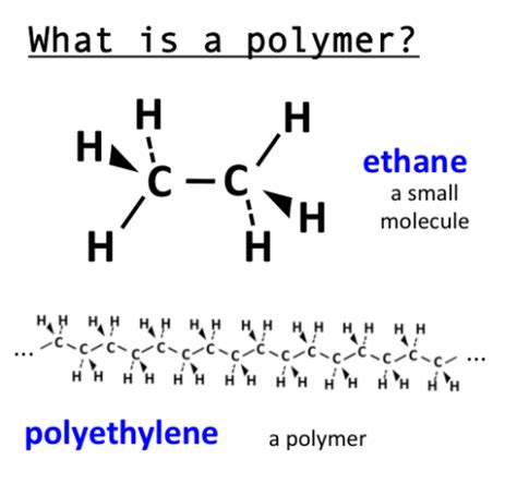 a protein is a polymer that is made of what is a polymer simple a polymer is a