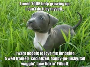Pitbull Meme - pitbull meme go lucky tail waggin face lickin