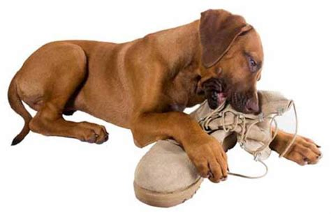 puppy chews everything best lasting chews keep your busy and